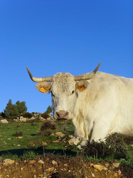 Reducir el consumo de carne para paliar cambio climático
